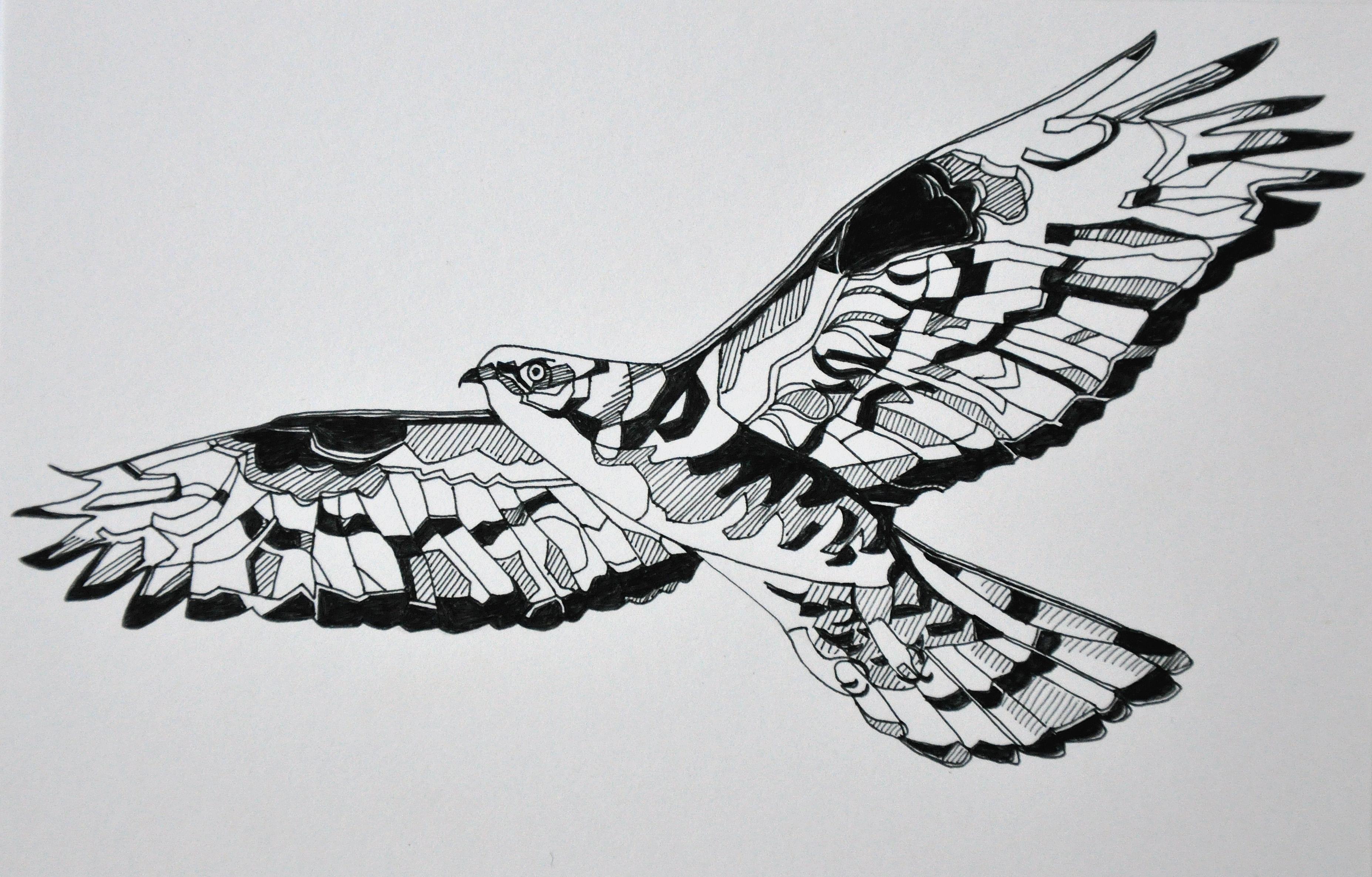 pen drawing nicolafieldingdrawings
